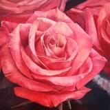 """<h5><em>Reddish Orange Rose #2</em> <strong> • </strong> 48"""" x 48"""" oil on linen</h5>"""