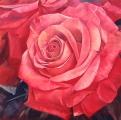 """<h5><em>Reddish Orange Rose #1</em> <strong> • </strong> 48"""" x 48"""" oil on linen</h5>"""